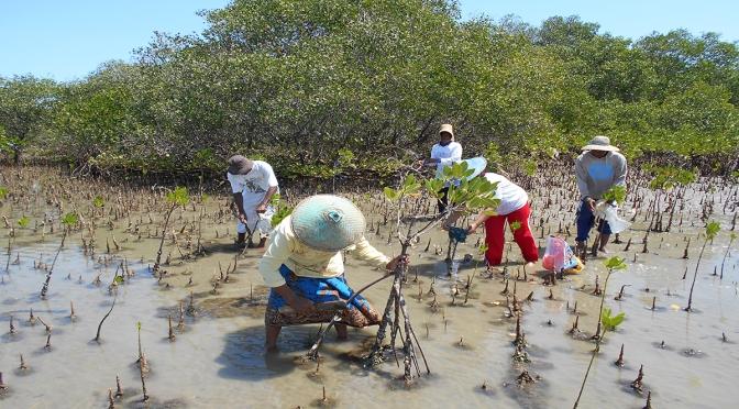 Menangkap Potensi Wisata Baru Pamekasan, di Kawasan Hutan Mangrove